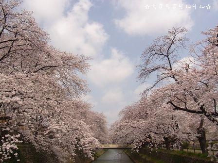 お実家の桜①