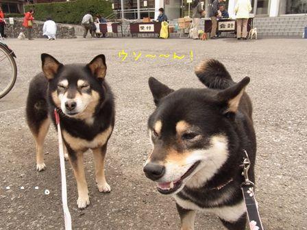 狂犬病予防接種②