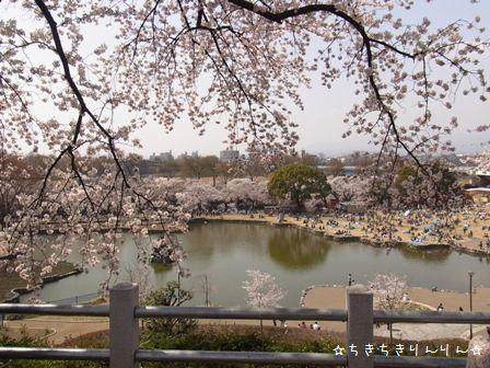 お実家の桜②