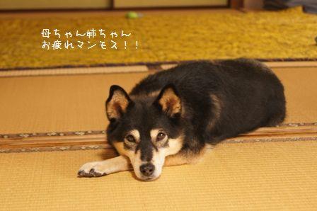 お実家なお盆2011②-④