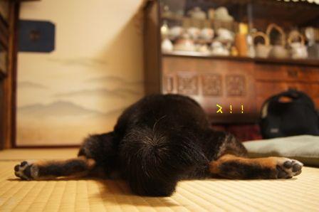 お実家なお盆2011②-⑤