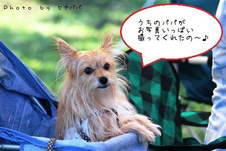 道満BBQ③