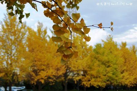 大宮公園④