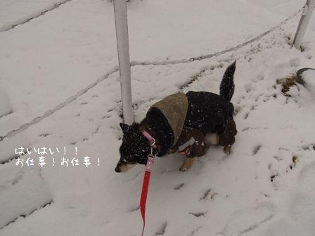 雪散歩ちき