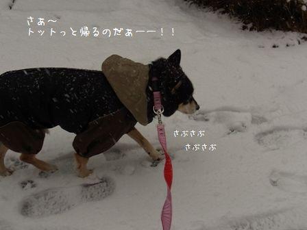 雪散歩ちき①