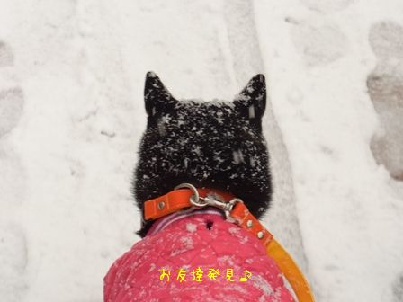 雪散歩凜②