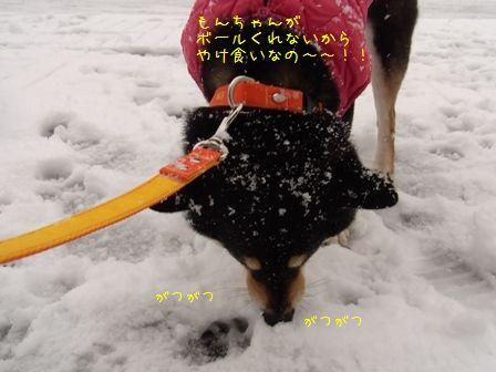 雪散歩凜③