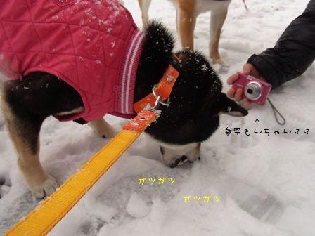 雪散歩凜⑤