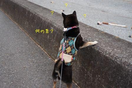千本松公園③