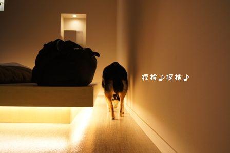 Hotel Dear Dog伊豆長岡④