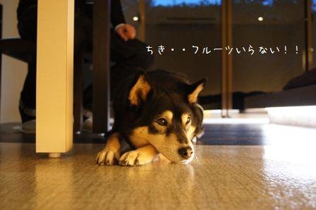 Hotel Dear Dog伊豆長岡⑨