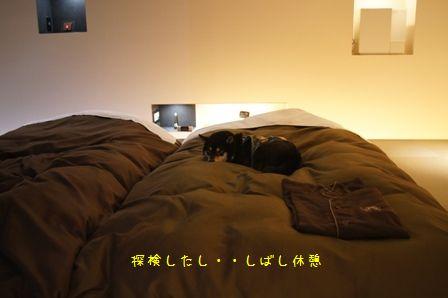 Hotel Dear Dog伊豆長岡⑩