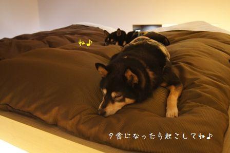 Hotel Dear Dog伊豆長岡⑪