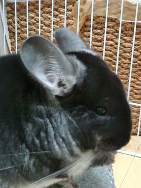 耳の色が可愛いでしょ!?