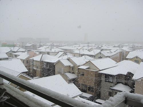2012-2-29-01.jpg