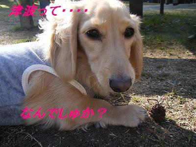 2010_0222love30019.jpg