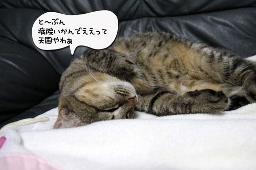IMG_0545-のコピー