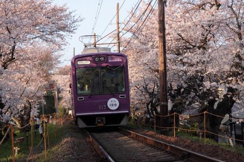 鉄道と桜!