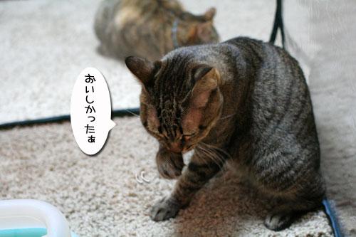 IMG_0781.jpg