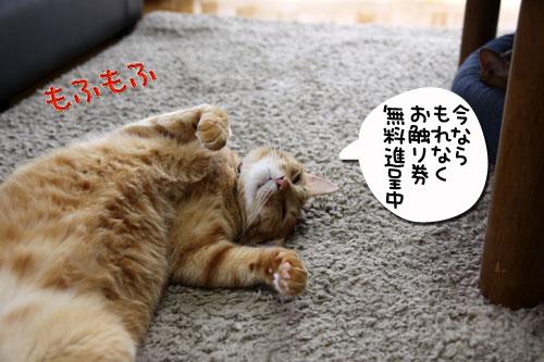 IMG_1420_20081227154016.jpg