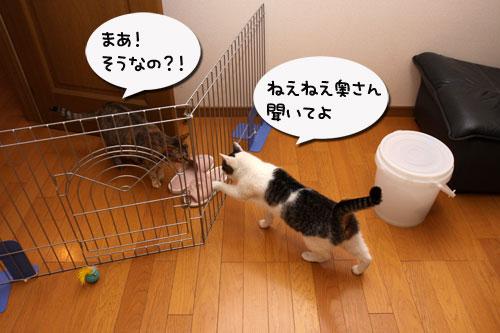 いきなり井戸端会議か!