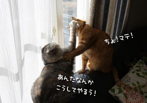 きぃーーー!