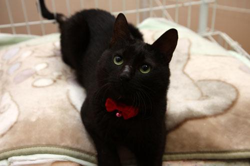 幸せの黒猫だよ!