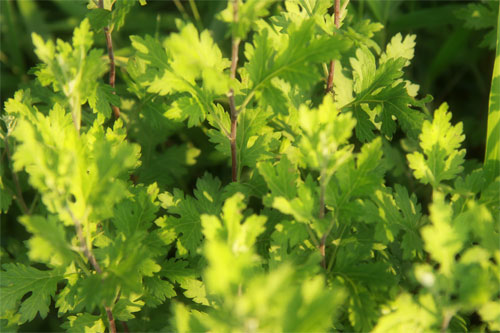 新緑の季節やね
