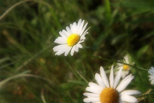 おばさんちのお花