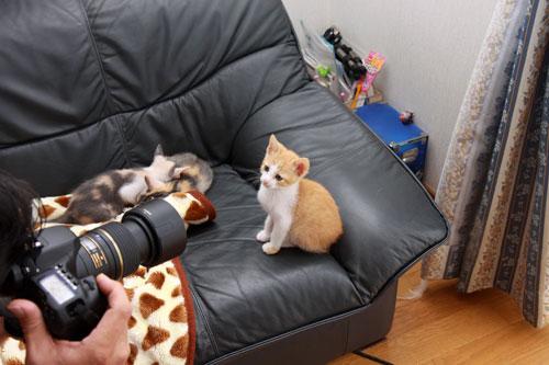 猫モデルになれるね