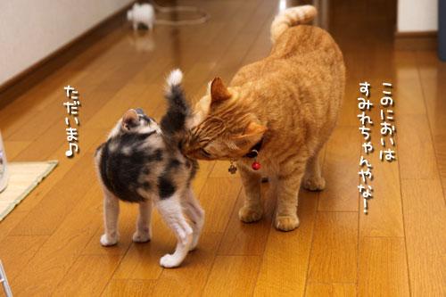ぷはーええにおい!