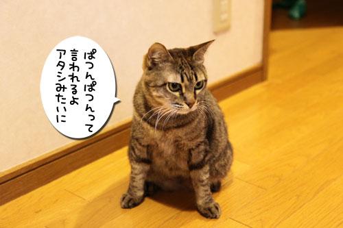 ぱつんぱつん同盟