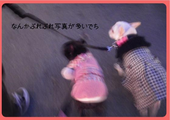 2011おせち5