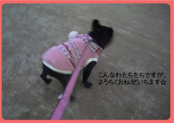 2011おせち4