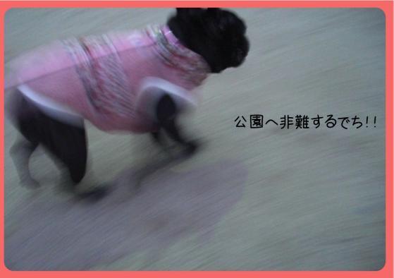 2011おせち2