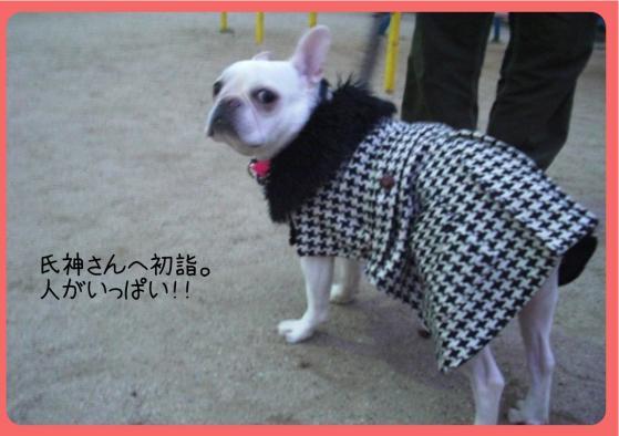 2011おせち1