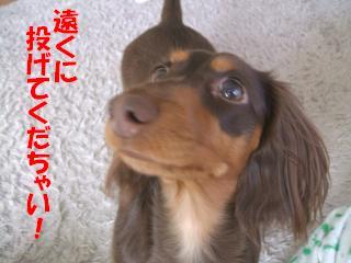 DSCF2158_convert_20090201130816.jpg