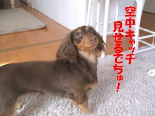 DSCF2159_convert_20090201131803.jpg