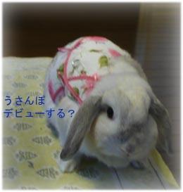 うさんぽデビューできそう!!