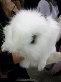 うさフェス2011とんちゃん