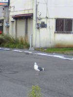 seagull_20090916183041.jpg