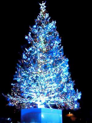 tree_2009.jpg