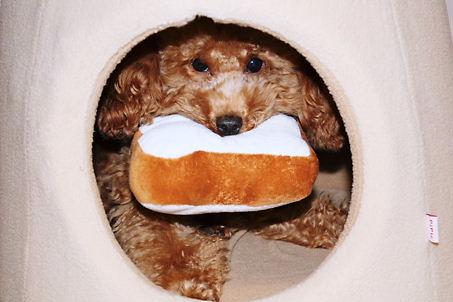食パンくわえたノア