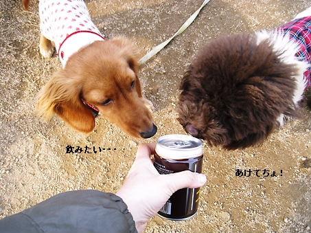 飲みたい。。。