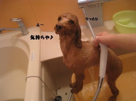 チョコ入浴中