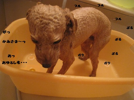 ノア入浴中