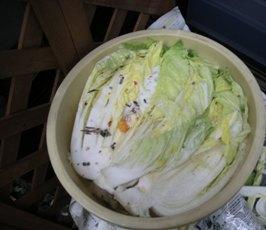 food1_20101218144356.jpg