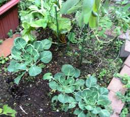garden1_20101109125904.jpg