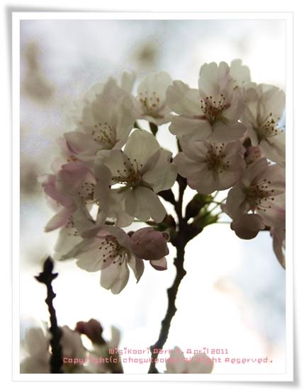 10 お花見