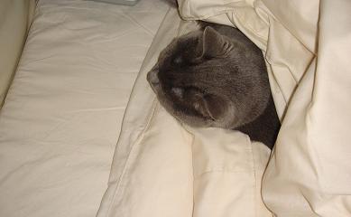 私の寝床1
